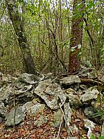 Tropical dry forest habitat for Cyrtopholis, Holothele and Phormictopus spp., s. Dominican Republic